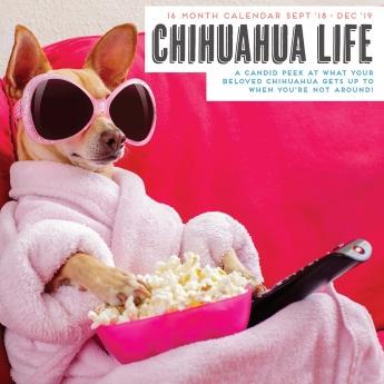 Magnet & Steel 2019 kalenteri Chihuahua Life