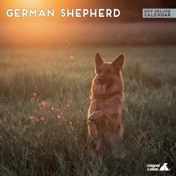Magnet & Steel 2019 kalenteri German Shepherd Deluxe
