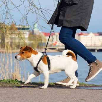 Pro Dog Stop vedonestovaljas