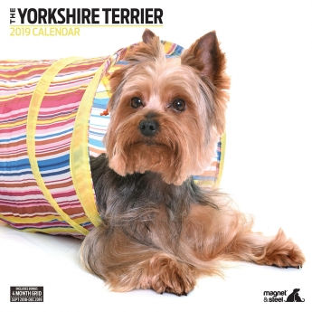 Magnet & Steel 2019 kalenteri Yorkshire Terrier Modern