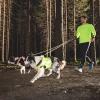 Hurtta Outdoors Dazzle koiran talutushihna keltainen