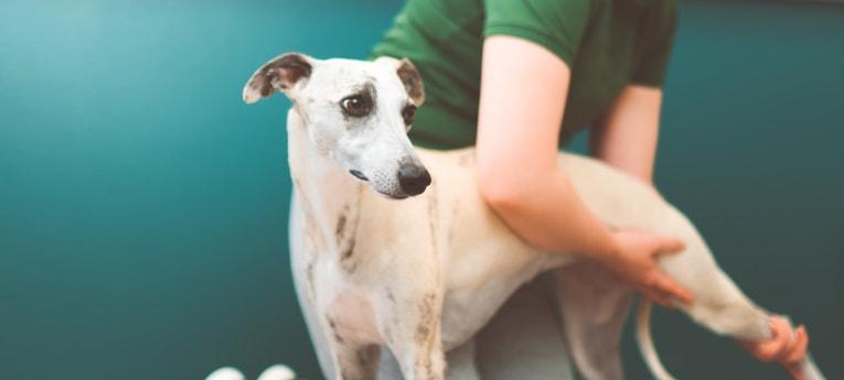 Musti ja Mirri koiran fysioterapia