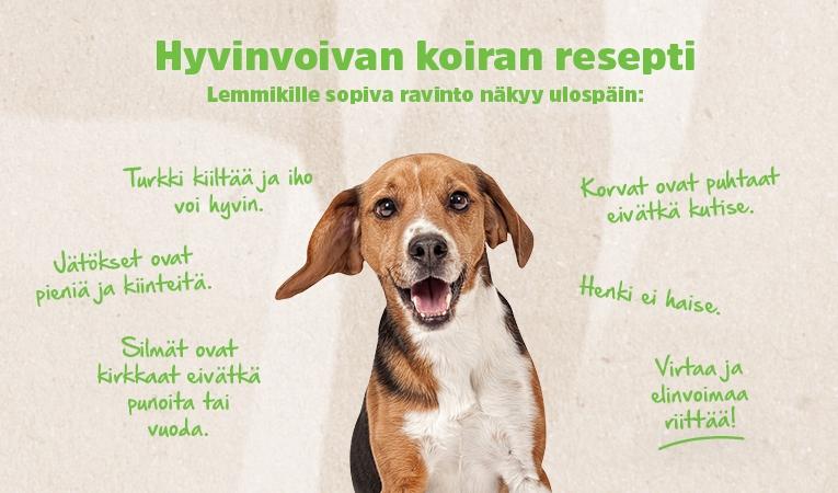 Hyvinvoivan koiran resepti