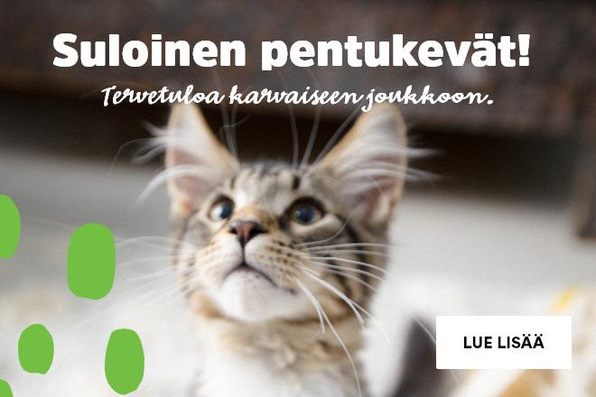 kissanpentu, kissanpennulle, pentu
