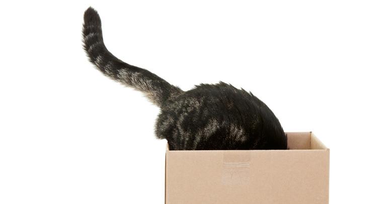 Miksi kissat tykkäävät laatikoista?