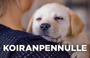 Purenatural koiranruoka koiranpennulle