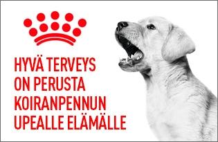 Royal canin koiranpennun ruoka