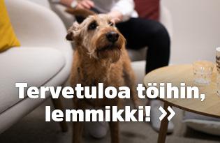 koira töissä