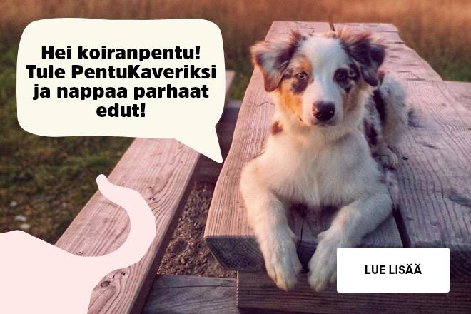 koiranpentu
