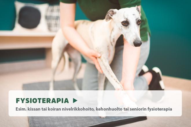 Koiran trimmaus, fysioterapia koiralle