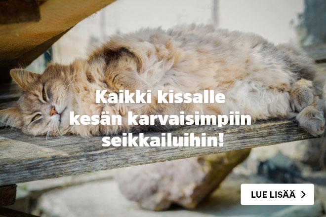 Kaikki kissalle kesän karvaisimpiin seikkaluihin!