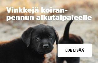 Koiranpentuopas