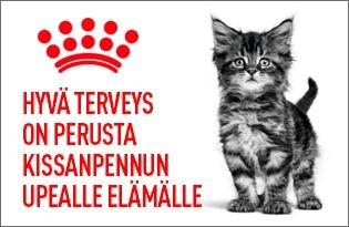 royal canin kissanpennun ruoka