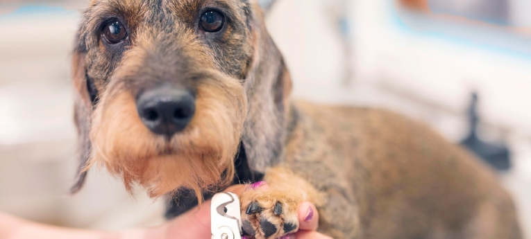Musti ja Mirri koiran kynsien leikkaus