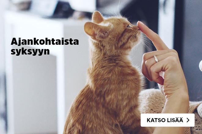 Uutuudet kissoille