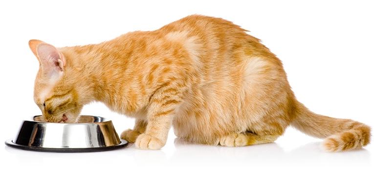 Kissan hampaiden hoito