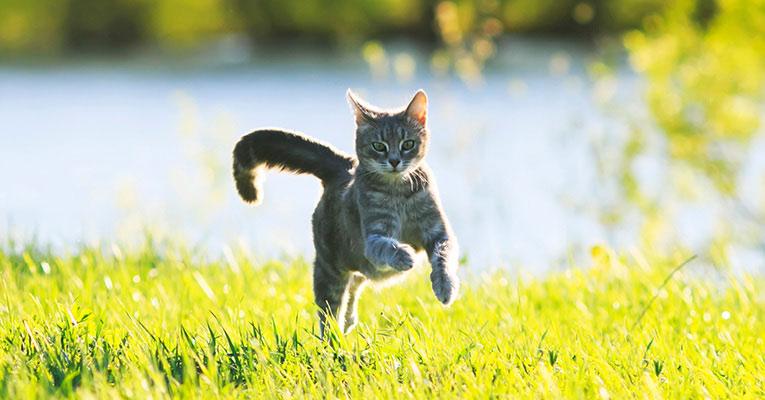 Ulkona kissan kanssa