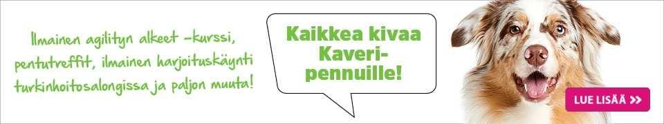 kaikkea kivaa Kaveri-pennuille