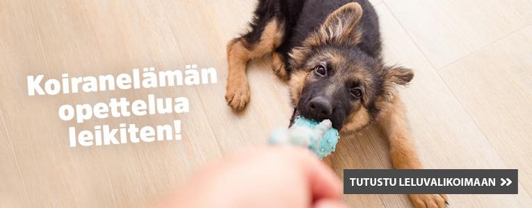 koiranpennun leikki