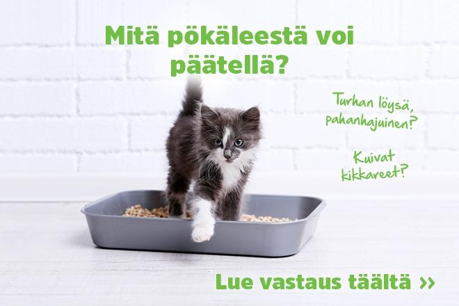 Kissan Kakka Haisee