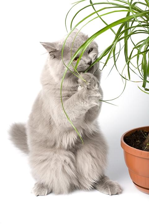 Kissan Neurologiset Oireet