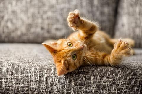 kissan lelut, kissan pelit, aktivointilelut