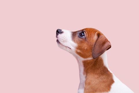 Koiran Elekieli Kuvina