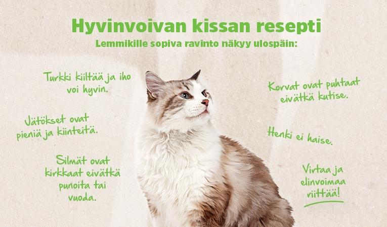 Hyvinvoivan kissan resepti