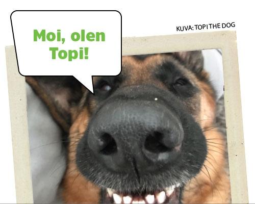 Topi the Dog