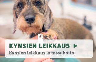 koiran kynsienleikkuu