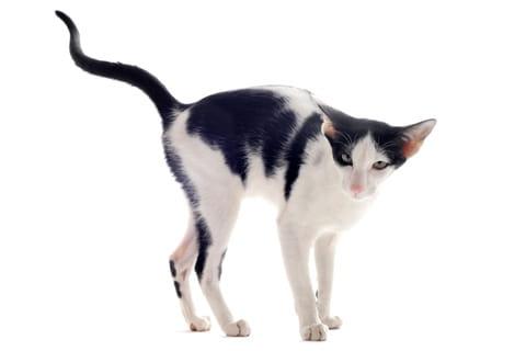 Kissa Pissaa Lattialle