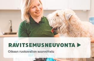 Ravitsemusneuvonta koiralle, ravitsemusneuvonta kissalle