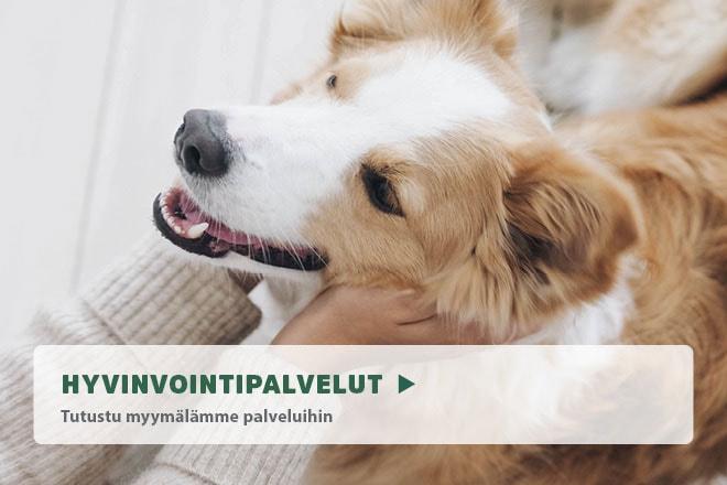 koiran trimmaus helsinki