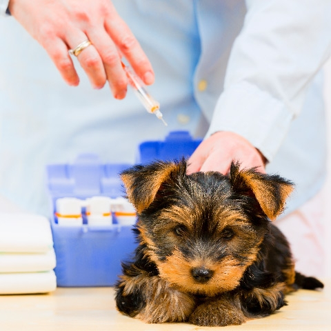 Koiran Rokotukset Vinkit Lemmikkiarkeen Mustin Ja Mirrin Verkkosivuilta Musti Ja Mirri