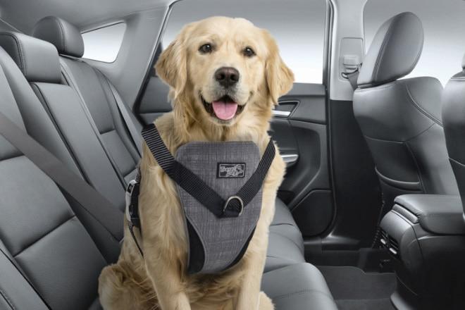 Koiran matkustustarvikkeet