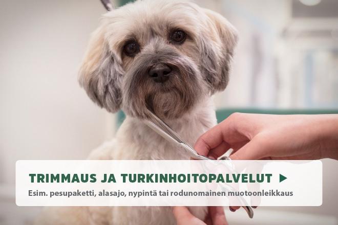 koiran trimmaus ja turkinhoito
