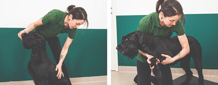 Koiran fysioterapia