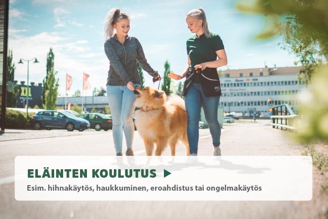 Koiran koulutuspalvelut, koiran koulutus, koirakoulu