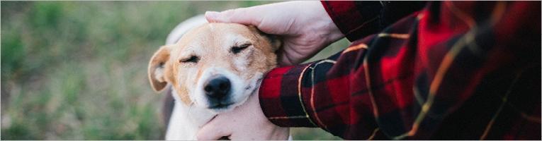 Palvelut koirille