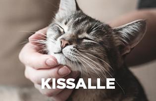 purenatural kissanruoka kissoille