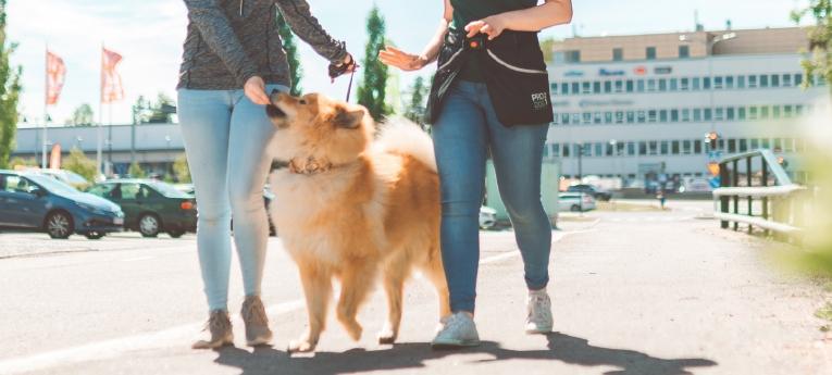 Musti ja Mirri palvelut koiran koulutus