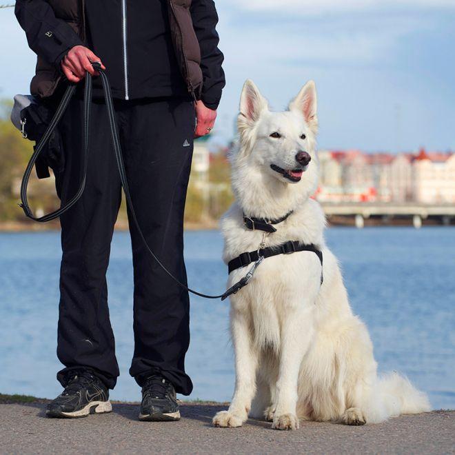 Pro Dog Control reaktiovaljas