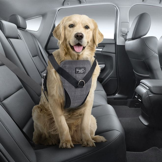 All For Paws Travel Dog autovaljas