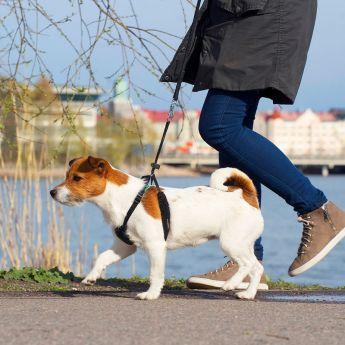 Pro Dog Stop antitrekksele**