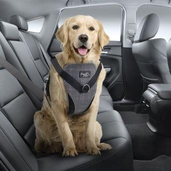 Nya Bilbelte og hundesele til hund - Musti DM-34