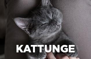 Purenatural kattunge