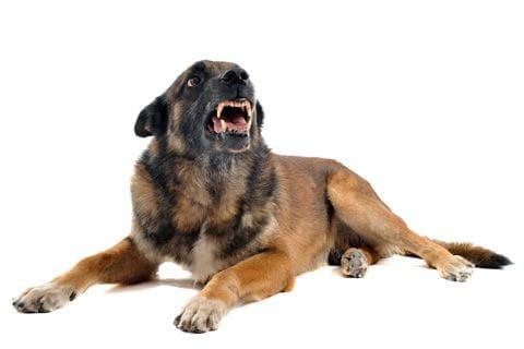 Hundens kroppsspråk2