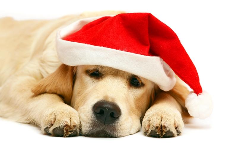 Jul med hund