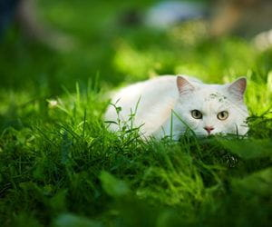 Kattens jaktadferd Musti