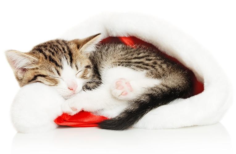Julens faror för katten